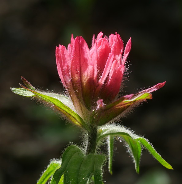 Another fine looking paintbrush.