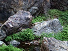 FERN AND STONE<br /> Cattail Falls<br /> <br /> Lots of contrast with these smooth, blue-gray rocks and the bright green ferns.