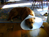 CONEHEAD PARKER<br /> You see what happens when you go around nibbling on yourself? Let that be a lesson to us all.
