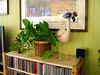 BOOKCASE STILL LIFE<br /> I gave her that flamingo watering can a few years back. I just love that thing!