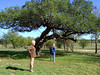 "THE TWO MARYS AND THE ""STOOPIN' TREE""<br /> I can just hear the wheels turning in cousin Mary's head: ""I could climb that!"""