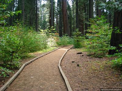 08-10-11 Big Trees, California