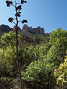MOUNTAIN WITH AGAVE STALK<br /> <br /> This was just about the only agave stalk I could see on the trail, so I thought I'd better include it in the show. They always add a lot to a composition.