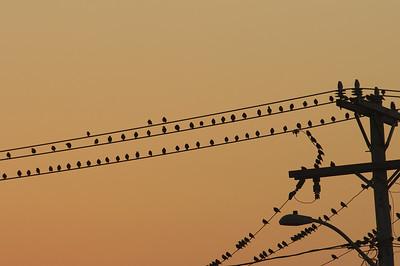 Birds on a wire... near Clinton Av Oak Bluffs