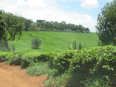 091108 Kenya - Limuru & Nairobi