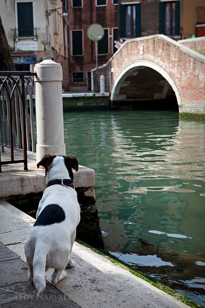 This dog just pranced by mom & I... It was the most curious thing, then he just stopped and stared across the canal. I was lucky enough to snap this image for memories sake.