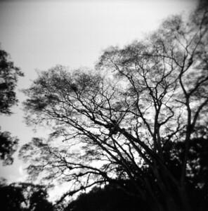 Trees 2008