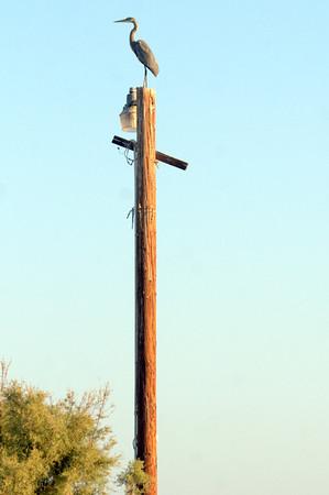 1311 Baja 1000- Tijuana  - Salton Sea