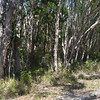 The seaside forest is very thick scrub