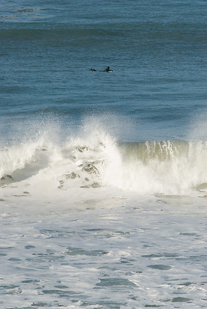 San Simeon Park, morning surfer