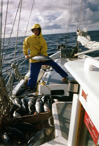 Transferring tuna to the blast freezer, somewhere in the north pacific