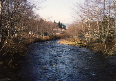 A Salmon Stream