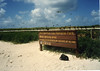Bird sanctuary on Michaelmas Cay