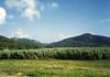 View of sugar cane from our Kuranda Train