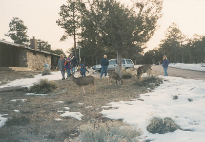 Mule deer outside our Lodge--Maswik