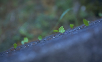 Leaf cutting ants Ecuador