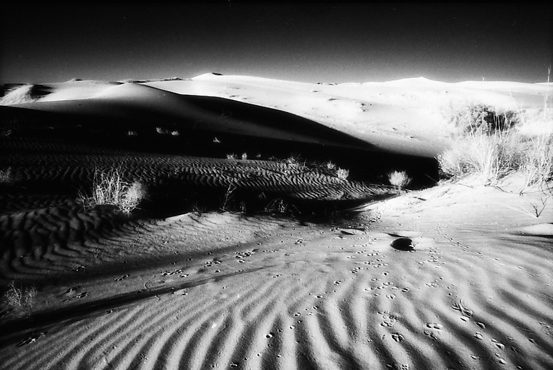 INFRARED LANDSCAPE WITH TRACKS<br /> I found these animal tracks particularly fascinating.