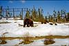1999-02 Grrls skiing 01