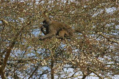 Monkeys at the entrance to Ngorongoro National Park