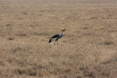 Bird in Ngorongoro Crater