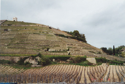 Vineyards across from Cave