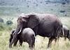 Sweet elephants