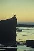 Zonsondergang op de Lofoten om 2:30