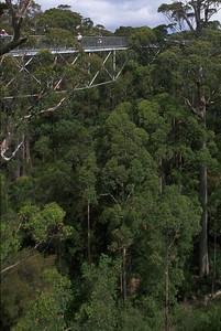 Tree top walk Southwest WA, Australia