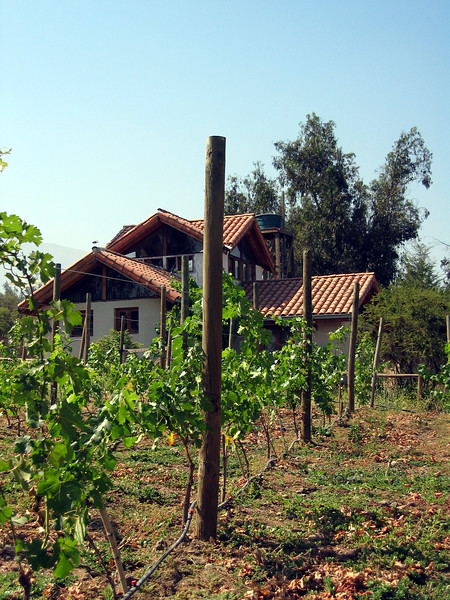 Santiago, newly planted vineyard