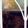 Kitty dosing in the window, Arcos de la Frontera