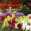 aix flower market2