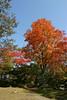 本來估計這時候到達北海道已經看不見什麼楓紅了,沒想到今年偏暖,楓紅得晚,這時候在大沼公園楓紅許多都尚未褪去