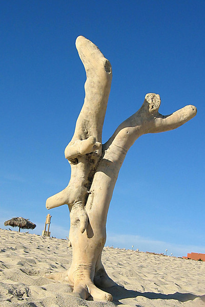 Driftward in a compromising position <br /> sitting on the beach outside our hotel.