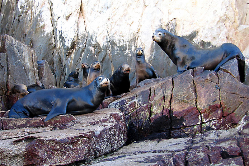 Sea lions hanging around Land's End.