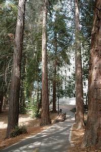 U.C. Berkeley入口的林蔭小徑