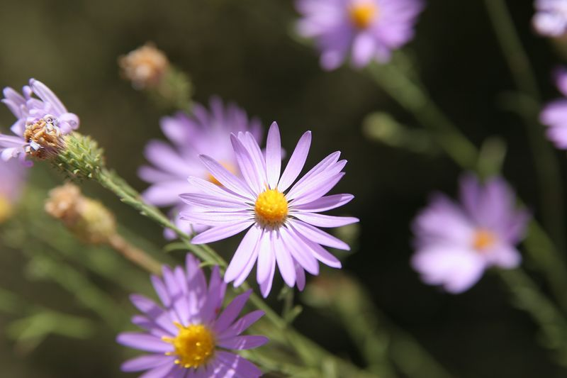 Utah, Arches National Park, Flowers