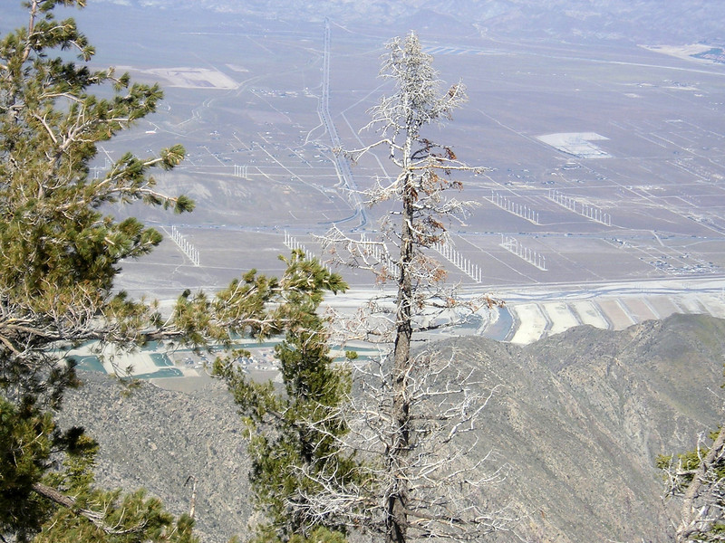 The desert below Palm Springs Tram