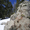 Lichen on rock at Palm Springs Tram