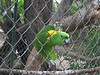 This curious parrot was anxious to make our acquaintence.
