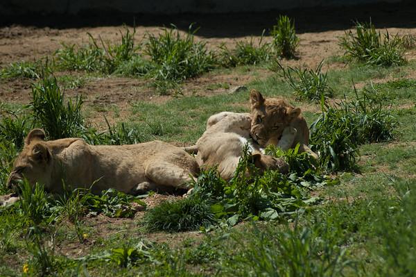 2005 Denver Zoo