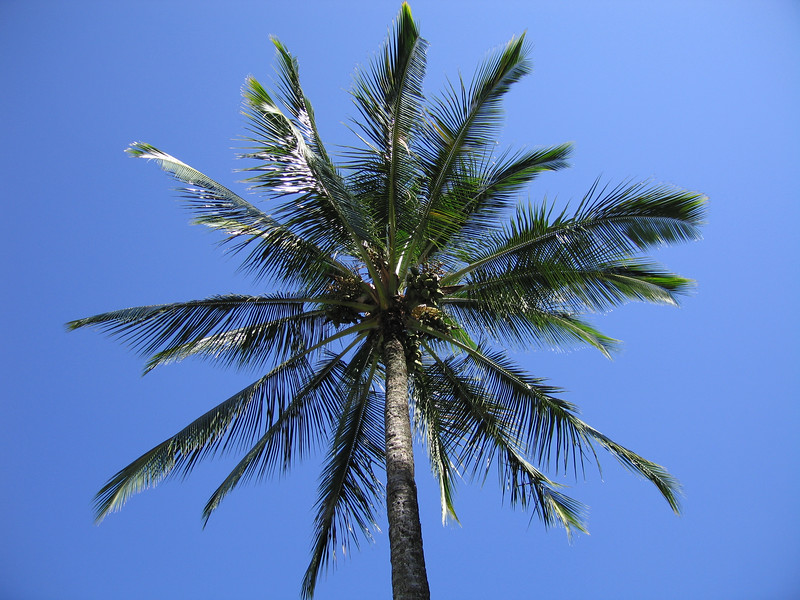 Yes, there are coconuts on Coconut Island.