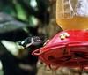more hummingbird