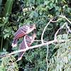 Watson birds
