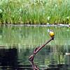 bird seen at oxbow lake
