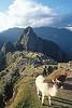 Alpaca and the citadel