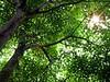 Trees<br /> <br /> © 2005 John Nicholas Moses