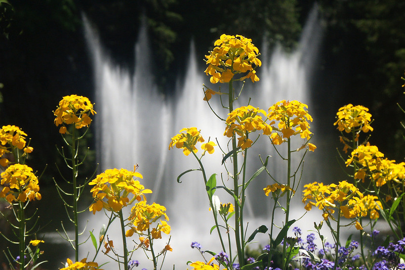 Flowers and fountain at Butchart Gardens on Vancouver Island.