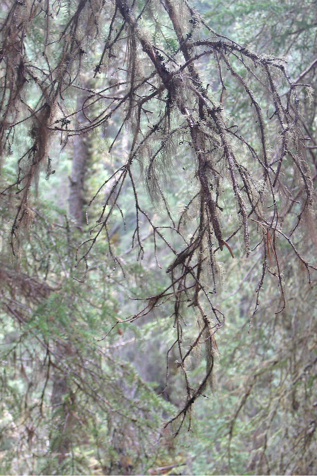 AROUND BANFF: Judith's shot of branches in Johnston Canyon.