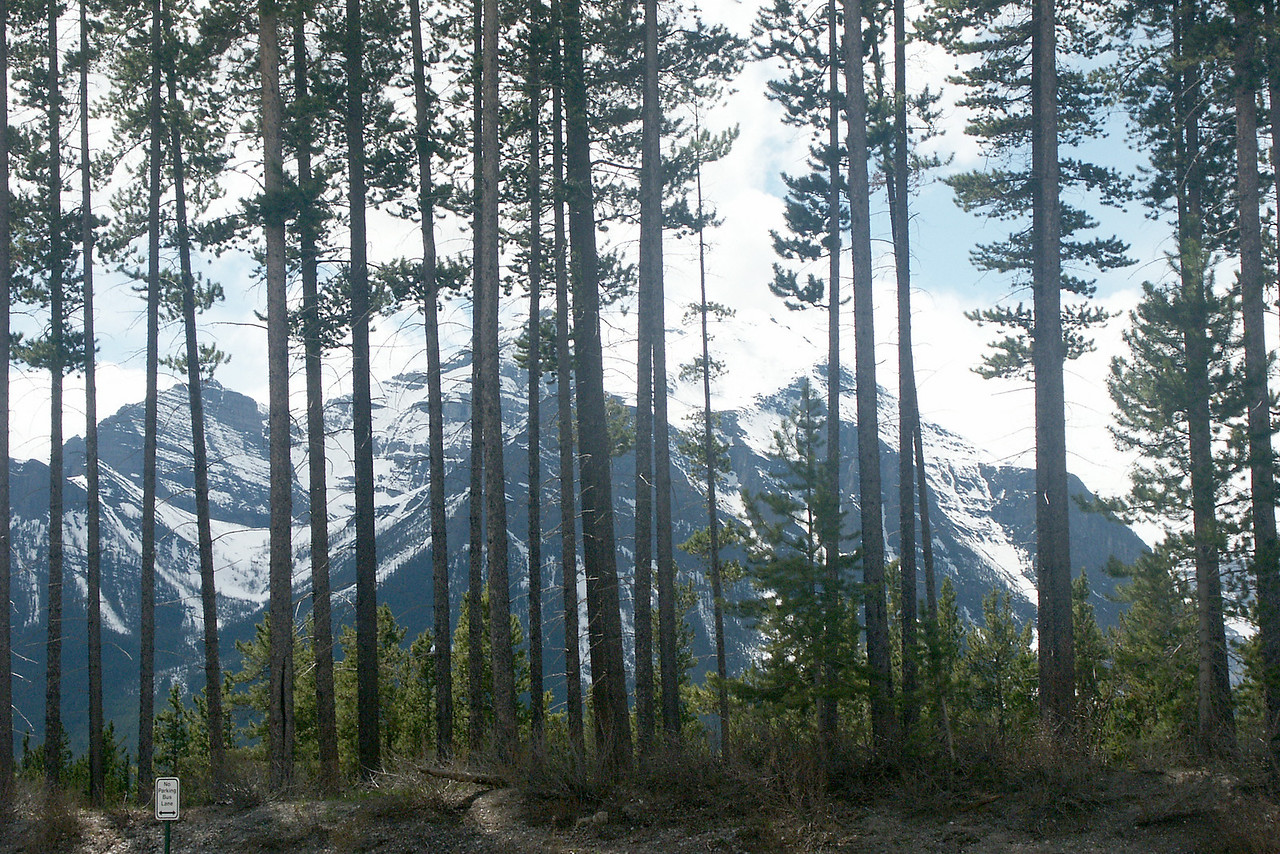 AROUND BANFF: Rockies through the trees