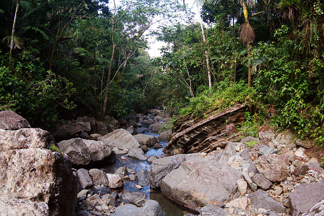 El Yunque - Tropical Forest
